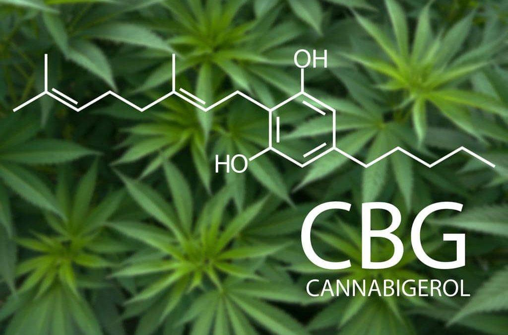 Qu'est-ce que le CBG ?